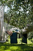 View of hammock in garden through olive branches