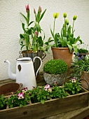 Various spring flowers in pots & window box