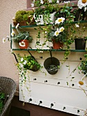Wall-mounted shelving holding various potted plants