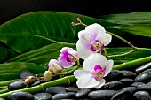 Decoration with orchid stems on dark pebbles, bamboo stems and leaves