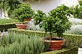 Landscaped, Mediterranean garden