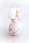 Japanese cherry blossom in small vase