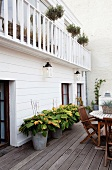 Potted hostas on wooden terrace adjoining white clapboard house with balcony balustrade