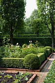 Flower garden in geometric beds edged in manicured hedges