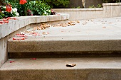 Low perspective of cement steps and debris.