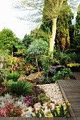 Garden complex with luxuriant, exotic planting and wooden walkways