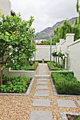 Wall surrounding geometric garden with hedges and lemon tree