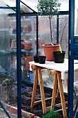Small greenhouse with potted plants on improvised table supported on wooden trestles