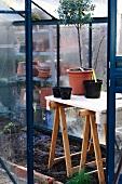 Kleines Gewächshaus mit Topfpflanzen auf einem improvisierten Tisch mit Holzböcken