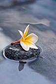 Frangipani flower on stone in water