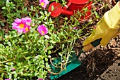 Behandschuhte Hand mit Gartenschaufel im Blumenbeet