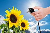 Hand holding electrical plug next to sunflower against blue sky and sun