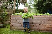 Toddler boy picking plants in backyard