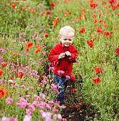 Toddler boy walking in field of flowers