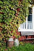 Old milk churns and garden bench against house facade covered with climbers