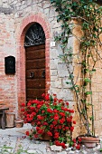 Potted Plant in Front of Arched Doorway