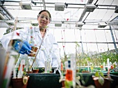 Scientist working with potted plants