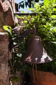 Vintage bell surrounded by climbing plant in garden