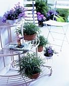 Halbkreisförmige Blumenetagere mit Blumentöpfen und Klappstühlen