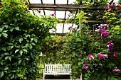 A garden bench in a pergola