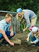 A family working in a vegetable garden