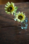Sunflowers in Water Glasses