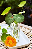 Nasturtium leaves in a water glass