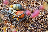 Handcart filled with various types of pumpkin