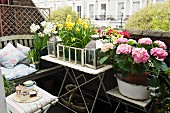 Small urban balcony with vintage character and luxuriant spring flowers; wooden bench comfortably decorated with scatter cushions and tray with tea set invite you to relax