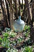 Old demijohn bottle in garden surrounded by snowdrops