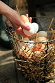 Fresh eggs on straw in wire basket