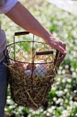 Fresh eggs on straw in wire basket