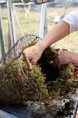 Lining a wire basket with moss