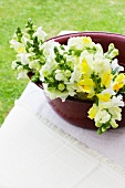 Outside -- yellow and white snapdragons in an old metal container