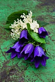 Harebell flowers (campanula sarastro) and elder flowers on an old metal table