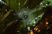 Spider's web in woods