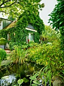 Summery atmosphere in garden with established pond and climber-covered house in background