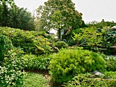 Summery atmosphere: various shrubs in established ornamental garden with tall tree and house in background