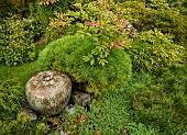 Natural still-life in ornamental garden: colour-coordinated ceramic floor vase amongst various green shrubs placed on stone floor