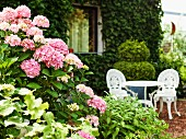 Pink hydrangea in front of patio of ivy-covered house; pretty, white garden furniture in romantic, nostalgic style