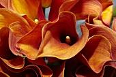 Detail eines rot-orangen Calla-Blumenstrausses