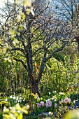 Spring garden with budding trees and spring flowers