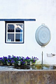 Purple-flowering potted plants on edge of stone pool below old zinc tub and blue and white country-house window