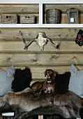 Dog lying on animal-skin blankets on bench below modern shelves mounted on wooden wall