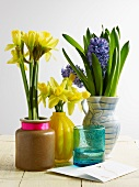 Hyacinths and narcissus in vases