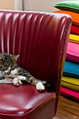 Cat on red, 50s leather chair in front of stacked cushions of various colours