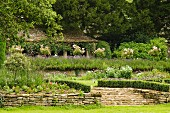 Summer atmosphere in terraced garden with clipped hedges lining steps and low stone walls