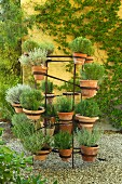 Potted rosemary and lavender plants in courtyard of provencal farmhouse