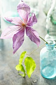 Purple Flower in an Antique Blue Jar