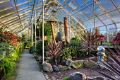 Professionally designed garden with tropical plants in a greenhouse (Volunteer Park Conservatory, Seattle)